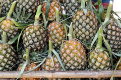 Pile of pineapple in fruit market Royalty Free Stock Photo
