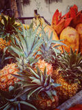 Pile of pineapples as a background Stock Images