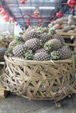 Pile of Pineapples in Big Basket Royalty Free Stock Photography