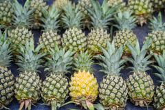 Pile of pineapples with both ripe and unripe one.  stock images