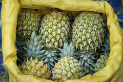 Pile of pineapples with both ripe and unripe one.  stock photos