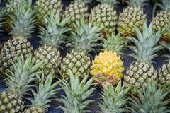 Dreamstime Photos Editorial Illustrations Videos Audio Free Photos My Account Vinhdav Prices and download plans Sign out Ho. Pile of pineapples with both ripe Stock Photography