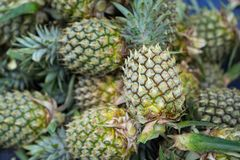 Pile of pineapples with both ripe and unripe one.  stock photo