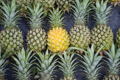 Pile of pineapples with both ripe and unripe one.  royalty free stock photo