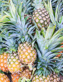 Pile of Pineapples. In Market Stock Images