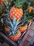 Pile of pineapples at market Stock Photo