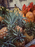 Pile of pineapples at market Stock Photography