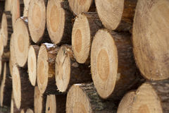 Pile of pinewood logs. Pile of pinewood timber logs from aside Stock Photography