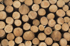 Pile of pinewood logs. Pile of pinewood timber logs with different sizes Stock Photography