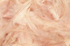 Pink feathers stock photos