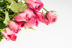 Pile of pink rose blossoms Royalty Free Stock Photos