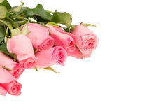 Pile of pink rose blossoms Royalty Free Stock Photo