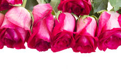 Pile of pink roses Royalty Free Stock Photos