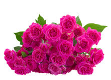 Pile  of pink roses close up Royalty Free Stock Photo