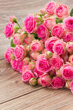 Pile  of pink roses Stock Images