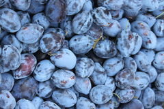 Pile of plums Royalty Free Stock Photos