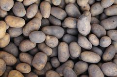 Pile of potatoes Royalty Free Stock Image