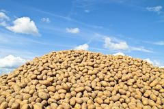 Pile of potatoes. Against a blue sky Royalty Free Stock Photography