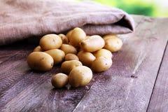 Pile of potatoes lying on wooden boards. Fresh potato.  Royalty Free Stock Photo