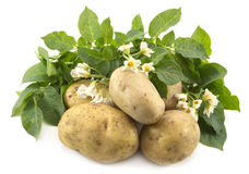 Pile of potatoes Stock Photography