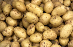 Pile of potatoes for texture for background. Pile of potatoes, raw vegetables in market royalty free stock photo