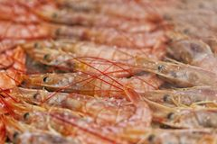 A pile of prawns cooking Royalty Free Stock Photos