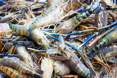 Pile of prawns Stock Images