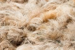 Pile of processed copra fibre Stock Image