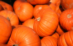Pile of pumpkin Royalty Free Stock Image