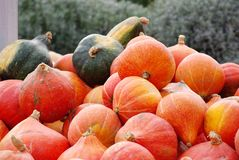 Pile of pumpkin in an outdoor market. With orange color Royalty Free Stock Photo