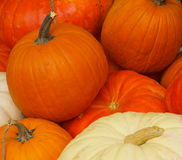 Pile of pumpkins Stock Image
