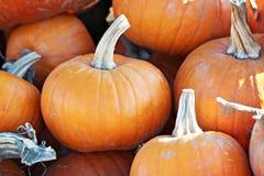 Pile of Pumpkins Stock Photography