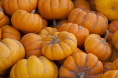 Pile of Pumpkins Royalty Free Stock Images