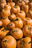 Pile of pumpkins. Royalty Free Stock Photo