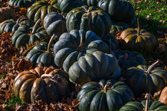 Pile of Pumpkins of another color Royalty Free Stock Image