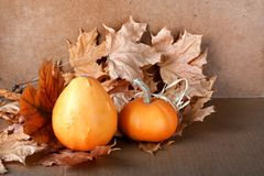 Pile of pumpkins with autumn foliage Stock Photo
