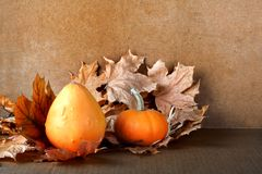 Pile of pumpkins with autumn foliage on background Stock Photography