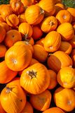 Pile of pumpkins, carving royalty free stock photo