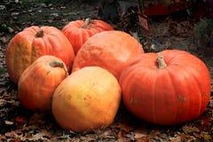 Pile of Pumpkins Royalty Free Stock Image