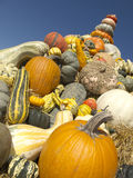 Pile of pumpkins. Different shapes and colors. Stock Photography