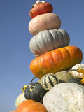 Pile of pumpkins. Different shapes and colors. Stock Image