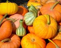 Pile of Pumpkins Stock Image