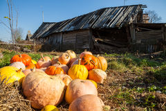 Pile of pumpkins stock images