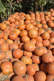 Pile of pumpkins Royalty Free Stock Photo