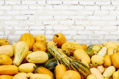 Pile of pumpkins over white brick background stock images