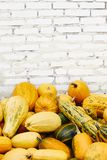 Pile of pumpkins over white brick background royalty free stock photo