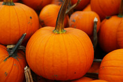 Pile of Pumpkins on a Pumpkin Patch Stock Image