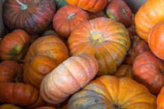 A pile of pumpkins Royalty Free Stock Images
