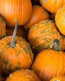 A pile of pumpkins Stock Photography