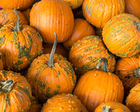 A pile of pumpkins Royalty Free Stock Image